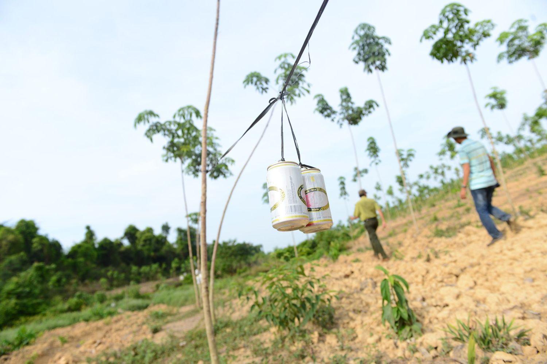 Hoạt động kiểm tra giám sát bảo vệ động vật hoang dã tại NLT Tân Lập